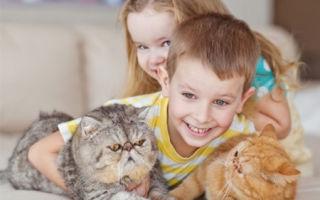 Как проявляется аллергия на кошек у детей, и что с этим делать