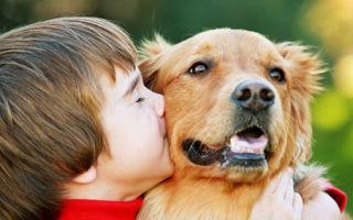 Как избавить ребенка от аллергии на собаку, не прибегая к расставанию