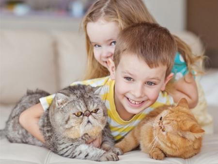 Аллергии на кошек у детей