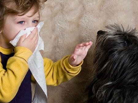 Причины аллергии на собак у малыша