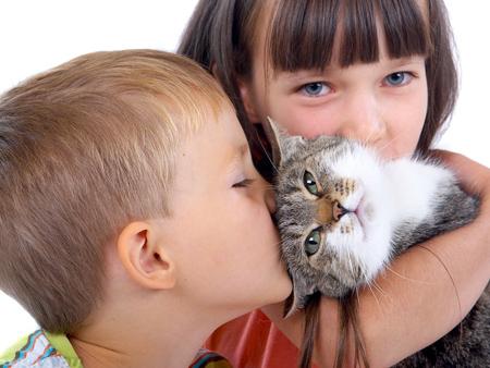 Профилактика аллергии на кошку у ребенка