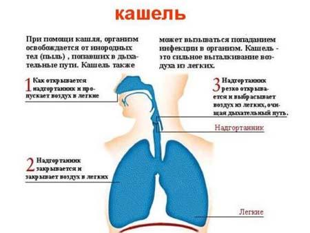Причины сухого кашля у детей