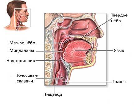 Симптомы трахеита у детей